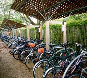 Wychfield bicycle rack